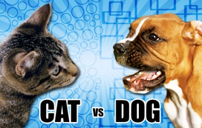 cat+vs+dog.jpg